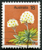 Postage stamp shows Helichrysum thomsonii Stock Photo