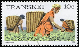 Postage Stamp - TRANSKEI royalty free stock images