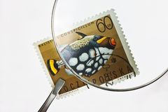 Postage stamp under magnifier with tweezers Stock Image