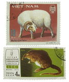 Postage stamps. Sheep and muskrat stock photo