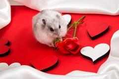 postal al día de la tarjeta del día de San Valentín santa con un hámster que da una rosa en rojo Foto de archivo libre de regalías