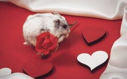 postal al día de la tarjeta del día de San Valentín santa con un hámster que da una rosa en rojo Fotografía de archivo libre de regalías