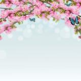 Postal con el arbusto floreciente de la primavera fresca y lugar vacío para y foto de archivo