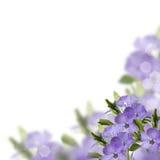 Postal con las flores frescas Imagen de archivo libre de regalías