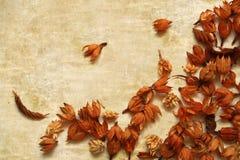 Postal con las flores marrones secas del otoño Fotos de archivo