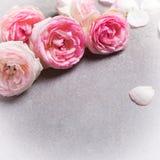 Postal con las rosas rosadas frescas en fondo gris de la pizarra Imagen de archivo