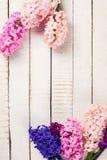 Postal con los jacintos de las flores frescas Fotos de archivo libres de regalías