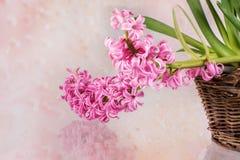 Postal con los jacintos de las flores frescas Fotos de archivo