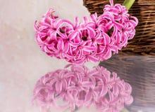 Postal con los jacintos de las flores frescas Foto de archivo libre de regalías