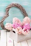 Postal con los jacintos rosados en caja de madera y hea decorativo Imágenes de archivo libres de regalías