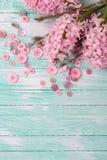 Postal con los jacintos y las flores del sauce y los botones rosados encendido Imagen de archivo