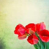 Postal con los tulipanes de las flores frescas y lugar vacío para su te Fotografía de archivo libre de regalías