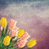 Postal con los tulipanes de las flores frescas y lugar vacío para su te Foto de archivo libre de regalías