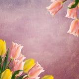 Postal con los tulipanes de las flores frescas y lugar vacío para su te Imagen de archivo