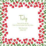 Postal con los tulipanes rojos situados en el borde Flores del estilo del polígono Fotos de archivo libres de regalías