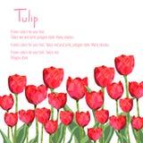 Postal con mucho de tulipanes rojos Estilo del polígono Ilustración del vector en el fondo blanco Foto de archivo libre de regalías