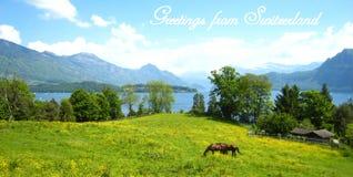 Postal con una hermosa vista sobre el lago suizo de la turquesa con las montañas nevadas, los yates, los veleros y dos caballos imagenes de archivo