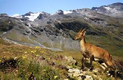 Postal de Alpes Fotografía de archivo libre de regalías