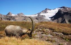 Postal de Alpes Imágenes de archivo libres de regalías