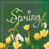 Postal de las letras de la primavera o bandera del cuadrado Fotografía de archivo libre de regalías