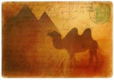 Postal del camello ilustración del vector