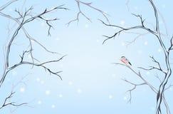 Postal del invierno Imágenes de archivo libres de regalías