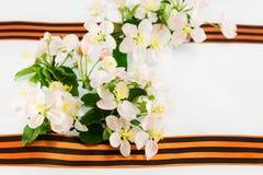 Postal el 9 de mayo Cinta de San Jorge y Br floreciente del manzano Imagen de archivo