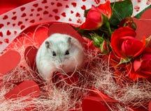 Postal en tonos rojos al día de tarjeta del día de San Valentín del santo Imágenes de archivo libres de regalías