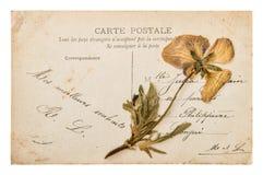 Postal manuscrita francesa antigua con la flor seca del pensamiento Imagen de archivo