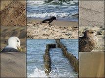 Postal: playa, mar, pájaros Fotografía de archivo