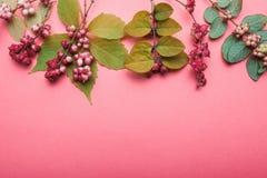Postal rural de las plantas del otoño con las hojas amarillas y las bayas rojas Espacio para el texto foto de archivo