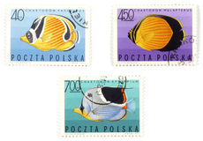 Postal stamps - set with fish Royalty Free Stock Images