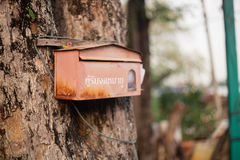 Postbox. Old red postbox on tree Royalty Free Stock Photography