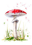 Postcard with amanita mushroom.Agaric and grass. Royalty Free Stock Image