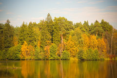 Postcard with autumn forest trees and lake. Nature green wood su Royalty Free Stock Photo