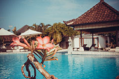 Postcard with beautiful Bali pool Royalty Free Stock Photography