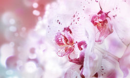 Postcard with beautiful orchids for the holiday. White orchids on pink blurry background royalty free stock photos