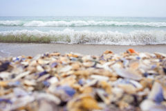 Postcard from the Black Sea. Sea with waves, sand and multicoloured seashells Stock Photos