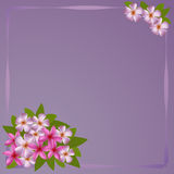 Postcard with bouquet of the plumeria Stock Photography