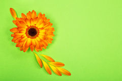 Postcard from a bright orange gerbera flower. On light green paper background Royalty Free Stock Photos