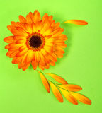Postcard from a bright orange gerbera flower. On light green paper background Royalty Free Stock Image