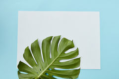 Postcard decorated leav. Horizontal frame decorated with a leaf of Monstera on a blue background copy of the space can be used to write your ideas, emotions, etc Royalty Free Stock Photos