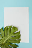 Postcard decorated leav. Piece of cardboard decorated with a leaf of Monstera on a blue background copy of the space can be used to write your ideas, emotions Stock Photos