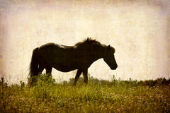 Postcard from Denmark. Artistic work of my own in retro style - Postcard from Denmark. - Old horse in a meadow. - Space for text Stock Images