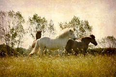 Postcard from Denmark (Series). Artistic work of my own in retro style - Postcard from Denmark. - Horses playing around. - Space for text Stock Images