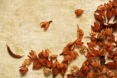 Postcard with dry brown autumn flowers. Dry brown autumn decoration plants on vintage background Stock Photos