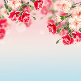 Postcard with elegant  flowers and empty  place for your text Royalty Free Stock Photos