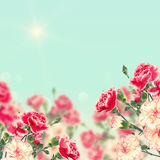 Postcard with elegant  flowers and empty  place for your text Stock Photography