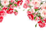 Postcard with elegant  flowers and empty  place for your text Royalty Free Stock Image