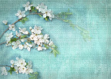 Postcard floral template. Light background with white flowers on a tree branch. May be used for a graphic art, as a greeting or gift layout, wallpaper, web Royalty Free Stock Images